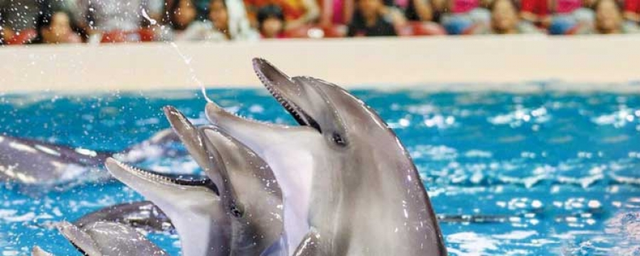 Dubai Dolphinarium  | Timings, Tickets, Activities, Shows | Best Tour