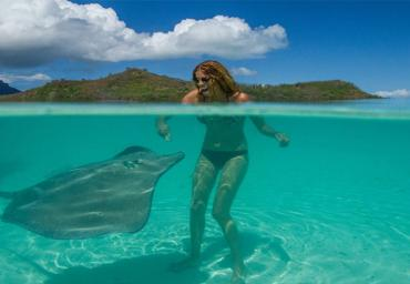 Sting ray feeding in Bora Bora open water